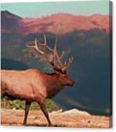 Bull Elk On Trail Ridge Road Canvas Print