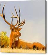 Bull Elk Resting In The Grass Canvas Print