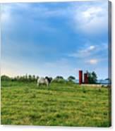 Bull In An East Texas Field Canvas Print
