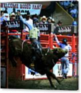 Bull Riding At The Grand National Rodeo Canvas Print