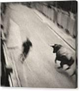 Bull Run 2 Canvas Print
