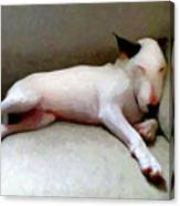 Bull Terrier Sleeping Canvas Print