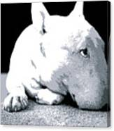 Bull Terrier White On Black Canvas Print