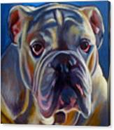 Bulldog Expression 2 Canvas Print