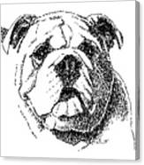 Bulldog-portrait-drawing Canvas Print