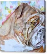 Bulldog - Watercolor Portrait.7 Canvas Print