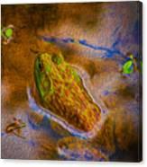 Bullfrog In Water Canvas Print