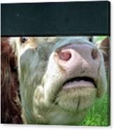 Bull's Eye Peek A Boo Deekflo Canvas Print