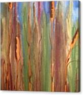 Bulrushes Canvas Print