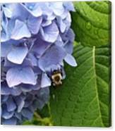 Bumble Bee Blues Canvas Print