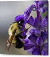 Bumble Bee Doing Lunch Canvas Print
