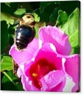 Bumble Bee Flying To Flower Canvas Print