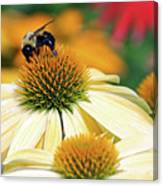 Bumble Bee On Top Canvas Print
