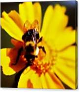 Bumble Bee On Yellow Flower Canvas Print