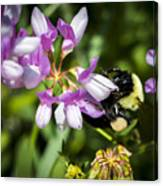 Bumble Bee Pollinating A Flower Canvas Print