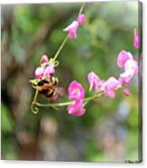 Bumble Bee2 Canvas Print