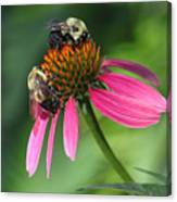 Bumble Bees At Work Canvas Print