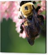 Bumble From Above Canvas Print