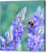 Bumblebee And Lupine Canvas Print