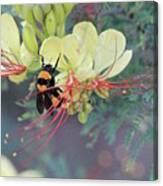 Bumblebee Before Dawn 2 Canvas Print
