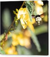 Bumblebee Heading Into Work Canvas Print