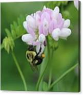 Bumblebee On Crown Vetch Canvas Print