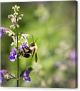 Bumblebee Canvas Print