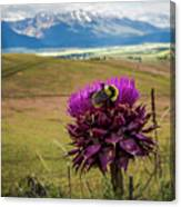 Bumblebee With The Best View Canvas Print