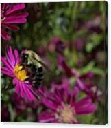 Bumbles In The Fall Canvas Print