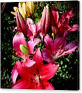 Bunch Of Lily Canvas Print