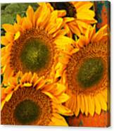 Bunch Of Sunflowers Canvas Print