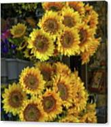 Bunches Of Sunflowers Canvas Print