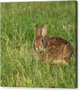 Bunny At Breakfast Canvas Print