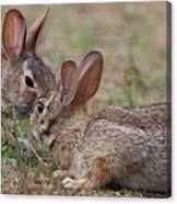 Bunny Encounter Canvas Print