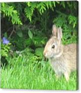 Bunny In Repose Canvas Print