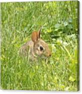 Bunny In The Grass Canvas Print
