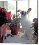 Bunny In Window Canvas Print