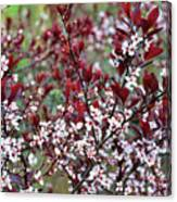 Burgundy And White On Green Canvas Print