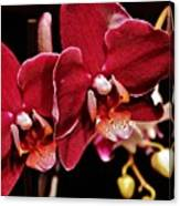 Burgundy Orchids Canvas Print