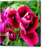 Burgundy Rose And Rose Bud Canvas Print