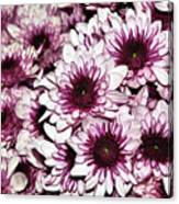 Burgundy White Crysanthemums Canvas Print