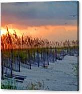 Burning Grasses And The Fence Canvas Print