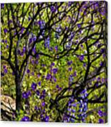 Burnt Bush Canvas Print