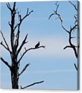 Burnt-tree Osprey Canvas Print