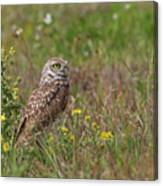 Burrowing Owl And Flowers Canvas Print