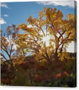 Burst Through The Trees Canvas Print