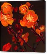 Bursting Into Bloom Canvas Print