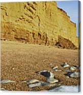 Burton Bradstock Beach Canvas Print