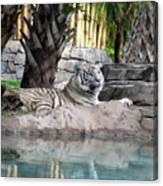 Busch Tiger Canvas Print