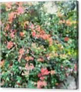 Bush Full Of Flowers. Canvas Print